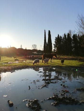 Ippoasi - rifugio per gli animali